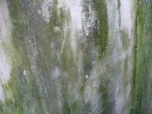 mold_damage