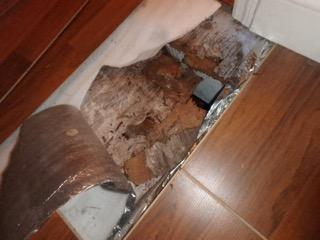 Collapsed Floor Tamarac
