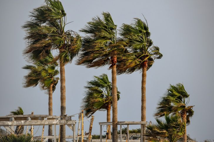 palm trees swaying in wind tropical storm